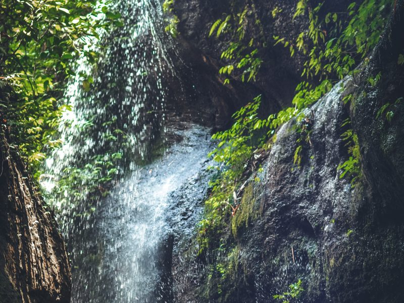 Remedios Integrativos para la piel de Secretos del Agua.